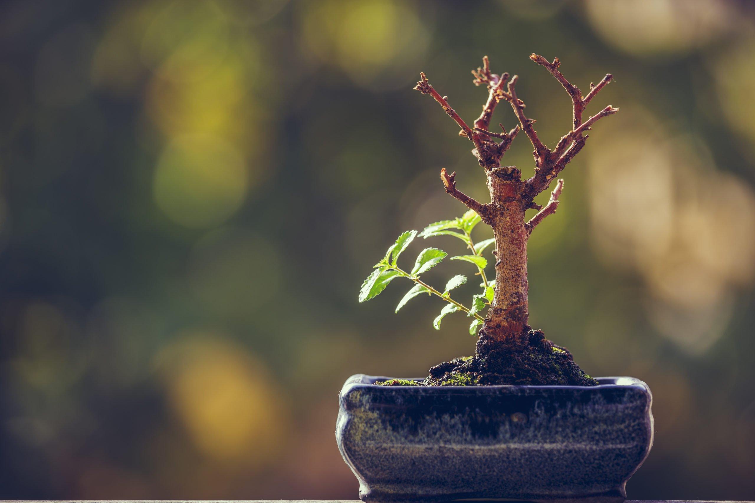 Resilienz und  Selbstführung